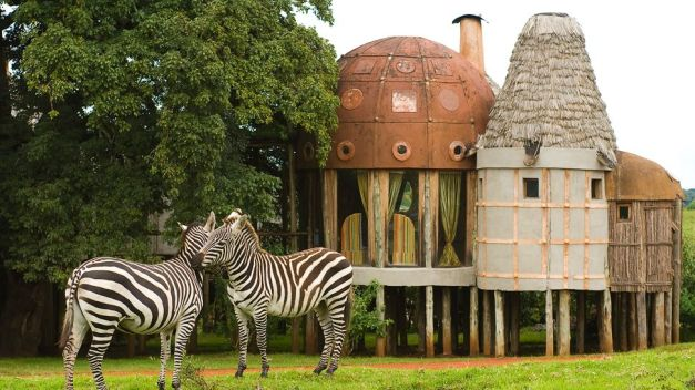003160-01-exterior-zebras