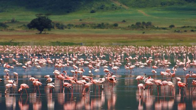 003160-12-pink-flamingoes
