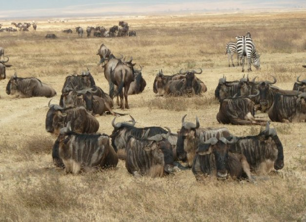 1288348698-ngorongoro-Tanzania-Africa-Ngorongoro